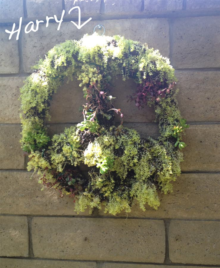 Wreath-Harry