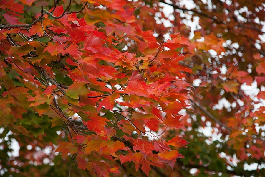 Color Palette: Fantastic Fall Foliage