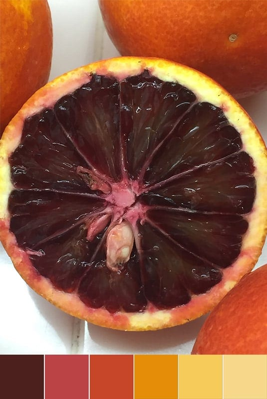 Color Palette:  Blood Orange