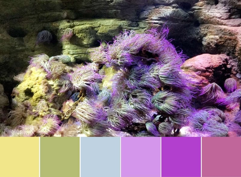 Color Palette:  Aquarium