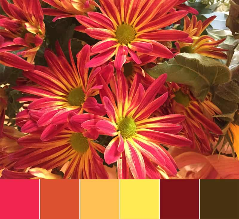 Color Palette – November Mums
