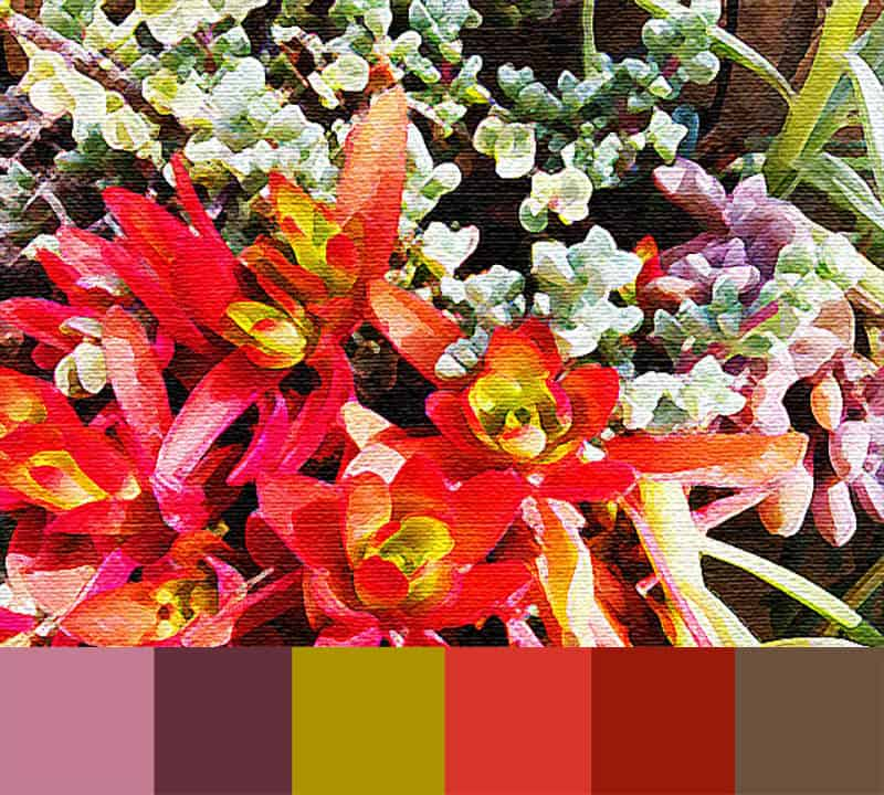 Drought Resistant Color Palette