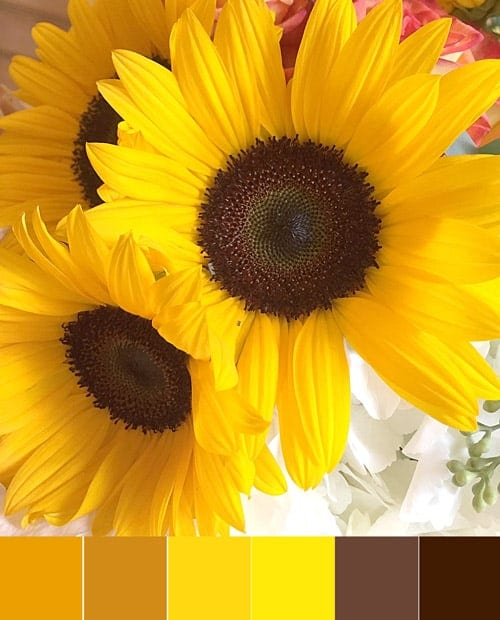 Sunshine-y Yellow Color Palette