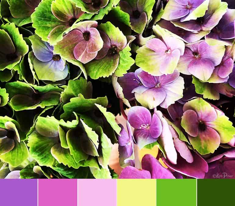 Color Palette:  Hydrangea Dream